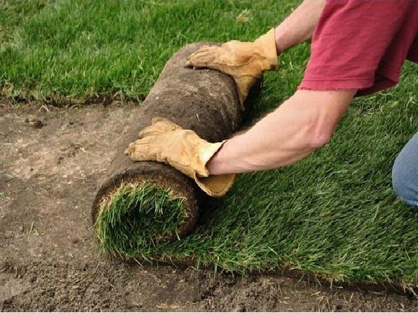 дерн газонный в рулонах